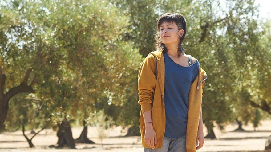Imagen del tráiler de la película 'El Olivo', dirigida por Icíar Bollaín.