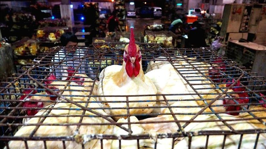 La gripe aviar se extiende por todo Taiwán y causa fuertes subidas de precios