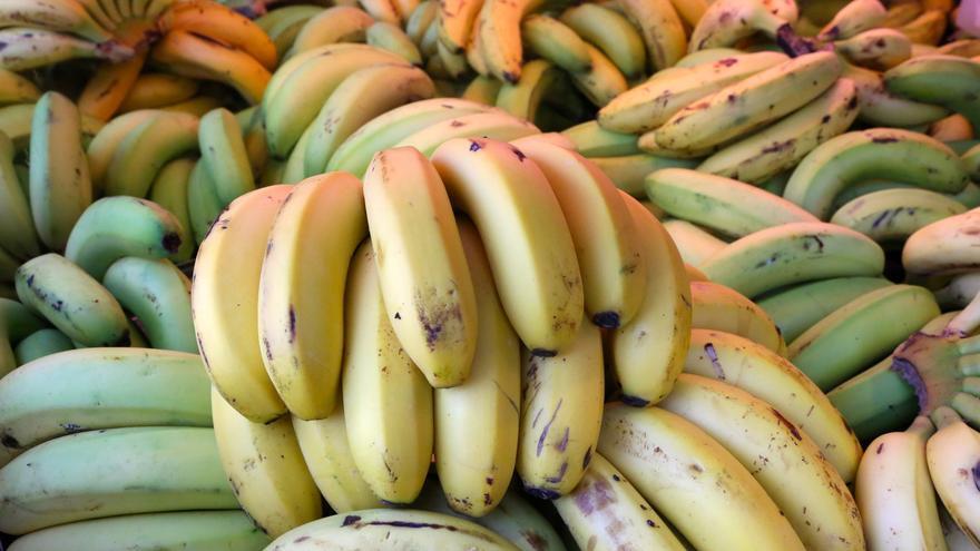 Plátano de Canarias (Alejandro Ramos)