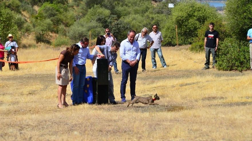 Medio Ambiente libera en Córdoba el primer lince ibérico tras rebajar la especie su nivel de amenaza