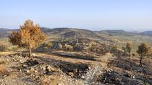 La futura gestión del medio ambiente valenciano: del programa a la realidad