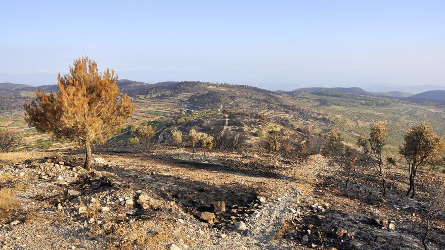 Els efectes dels devastadors incendis de 2012. Alcublas. / Andreu Escrivà