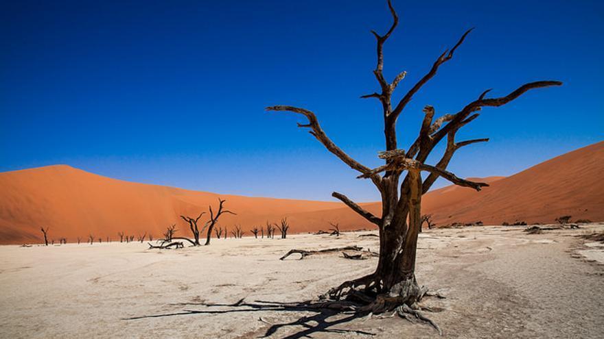 Árboles petrificados en el Desierto de Namib. Michael Schwarz