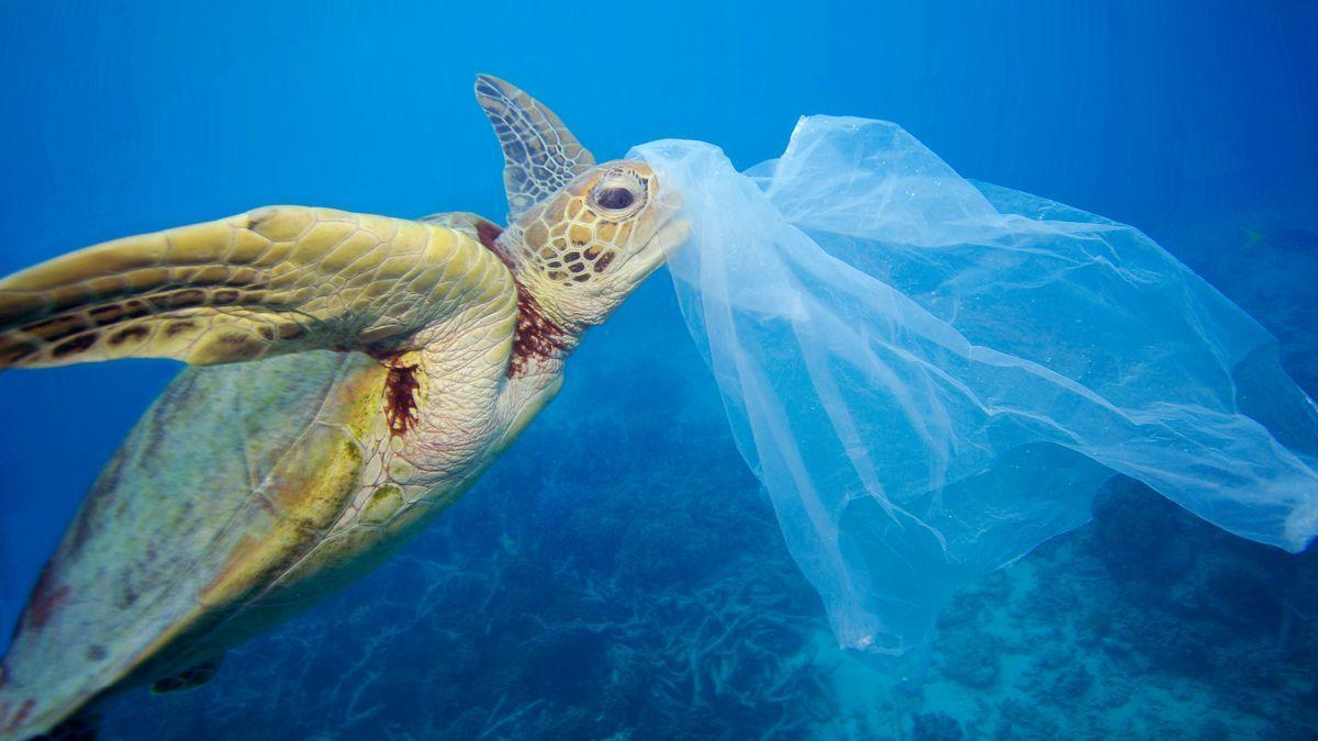 Una tortuga marina con plástico