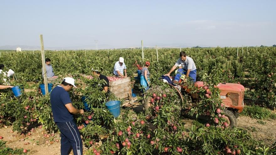 Unos 12.000 temporeros llegarán a Aragón en la actual campaña agrícola.