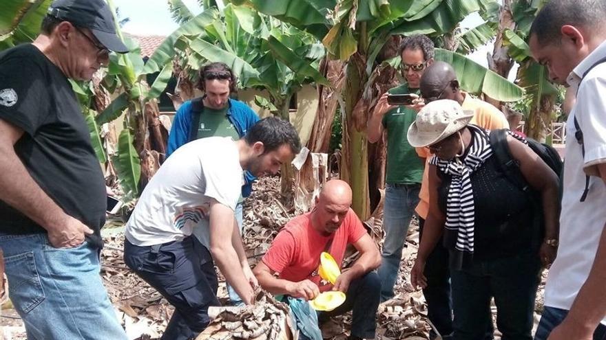 Trabajo de campo sobre fitosanitarios en la platanera