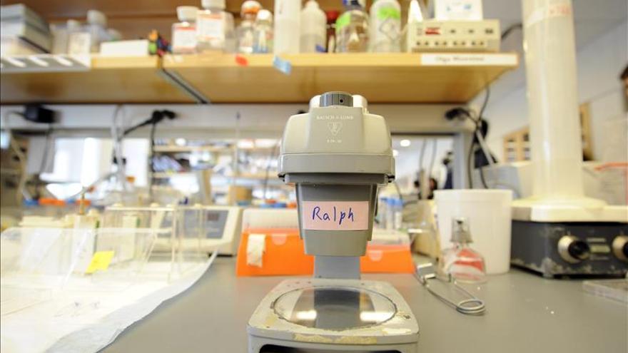 El alzhéimer podría estar provocado por hongos, según un estudio