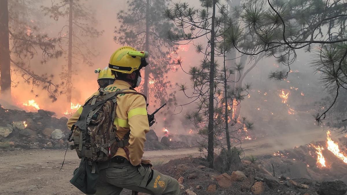 Agentes del Brifor trabajando en la extinción del fuego en Arico en mayo de 2021.
