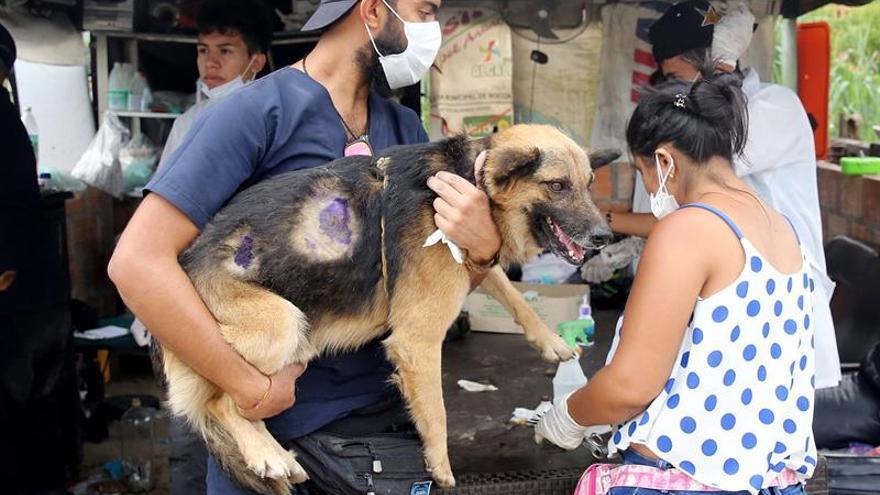 Un refugio de voluntarios, el resquicio de esperanza para animales de Mocoa
