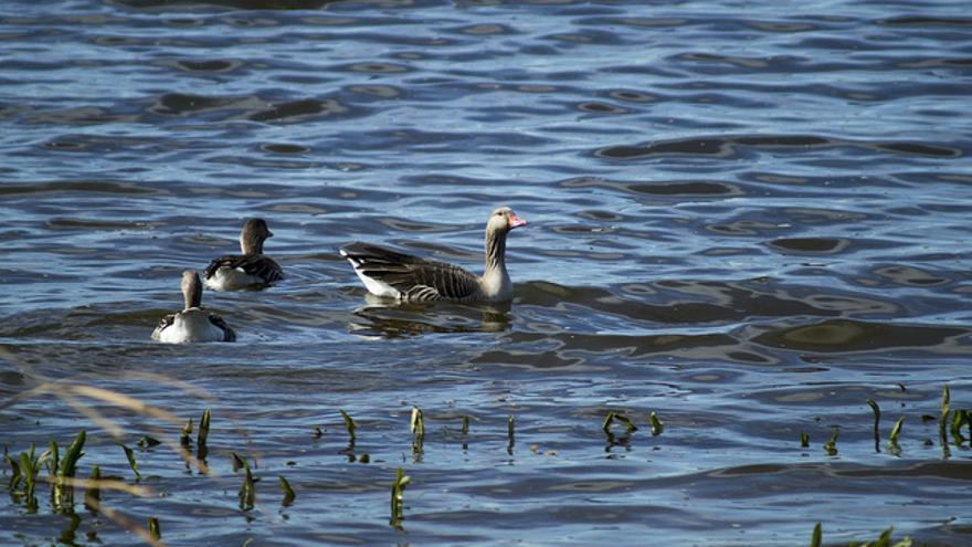 Aves en las aguas del Parque Nacional de las Tablas de Daimiel. Juan Carlos Arévalo