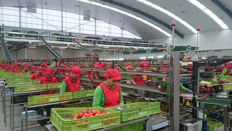 Asociación Valor Ecológico reclama un plan estratégico del sector hasta 2030 que aumente la producción y el consumo