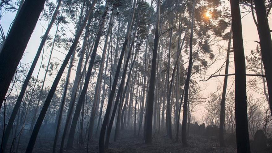 Declarado un incendio forestal en la Comarca de Sangüesa (Navarra)