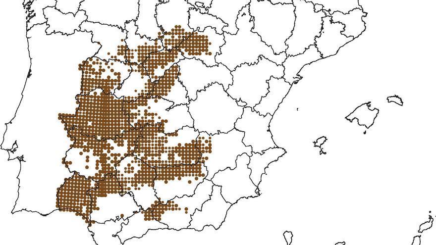 Distribución del rabilargo en España
