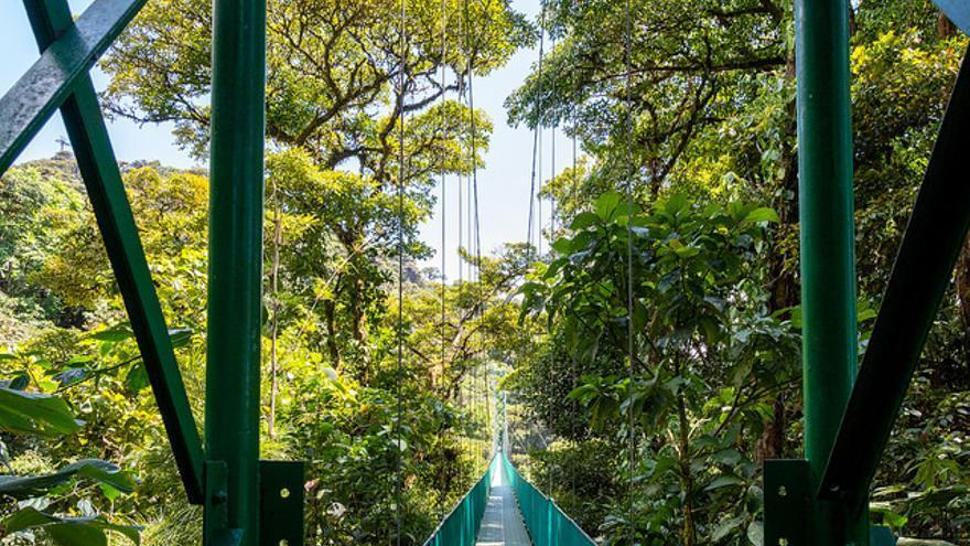 Pasarela sobre los árboles en Monteverde. Dconvertini