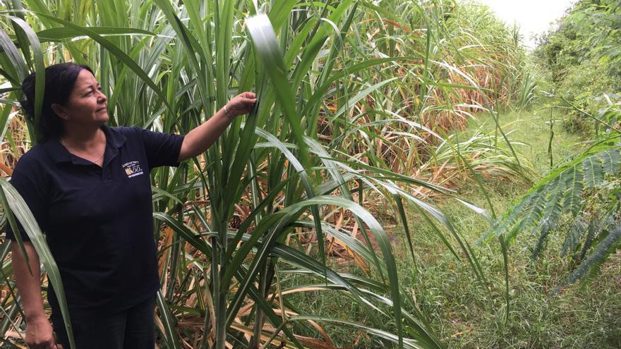 Una de las productoras de azúcar socia de la cooperativa Manduvirá, en Paraguay.