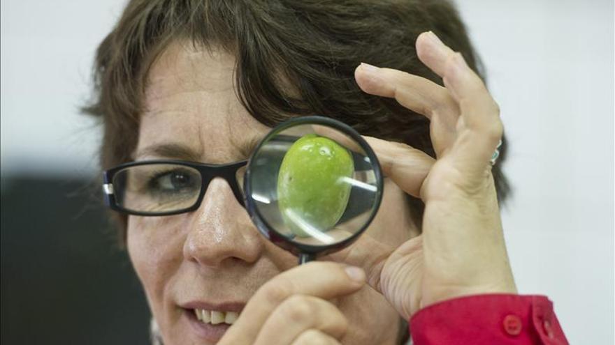 El Banco Mundial de Germoplasma del Olivo de Córdoba archiva la mayor colección genética