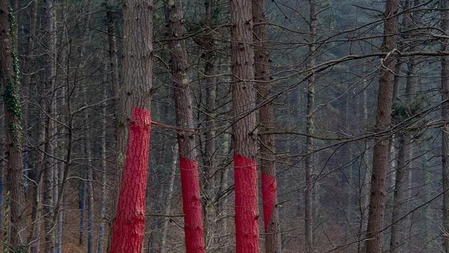 """El bosque de Oma de Ibarrola se cierra al público, afectado por la """"banda marrón"""", y no se abrirá para Semana Santa"""