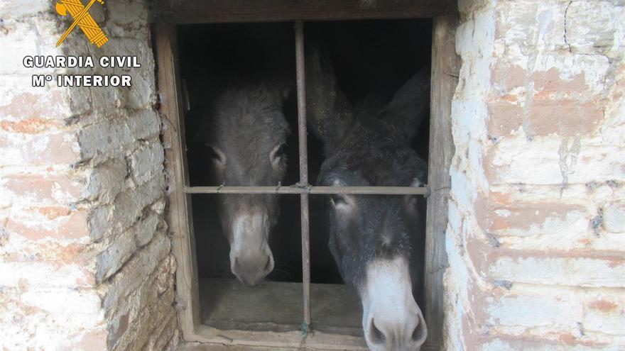 Dos de los animales rescatados con vida.