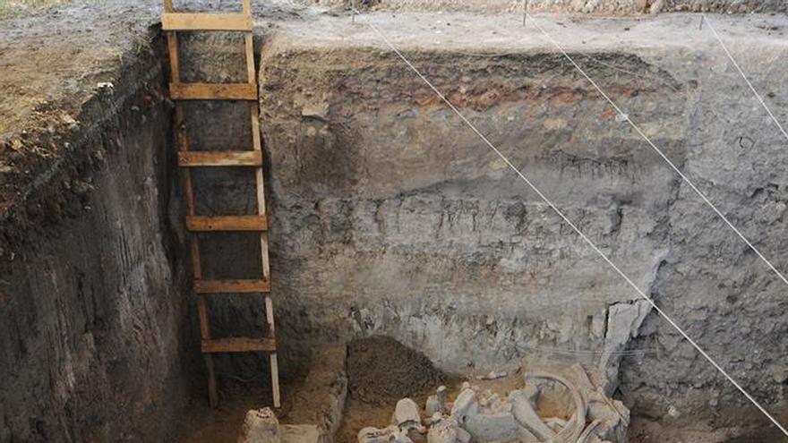 Recuperan gran parte de osamenta de mamut en el centro de México