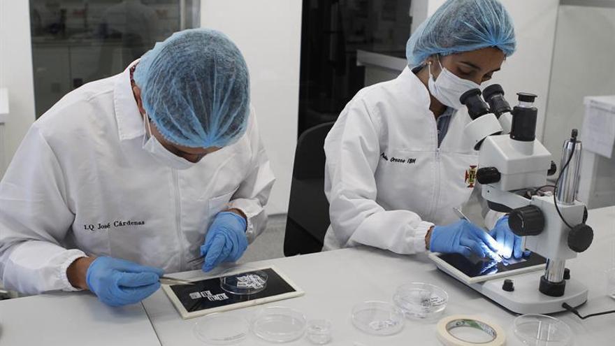 Un equipo científico descifra los acordes de los espermatozoides al navegar