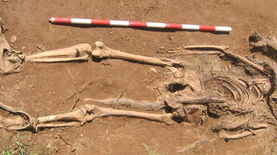 Restos humanos aparecidos en la fosa común de Encinasola (Huelva) // Foto: JUANMA GUIJO