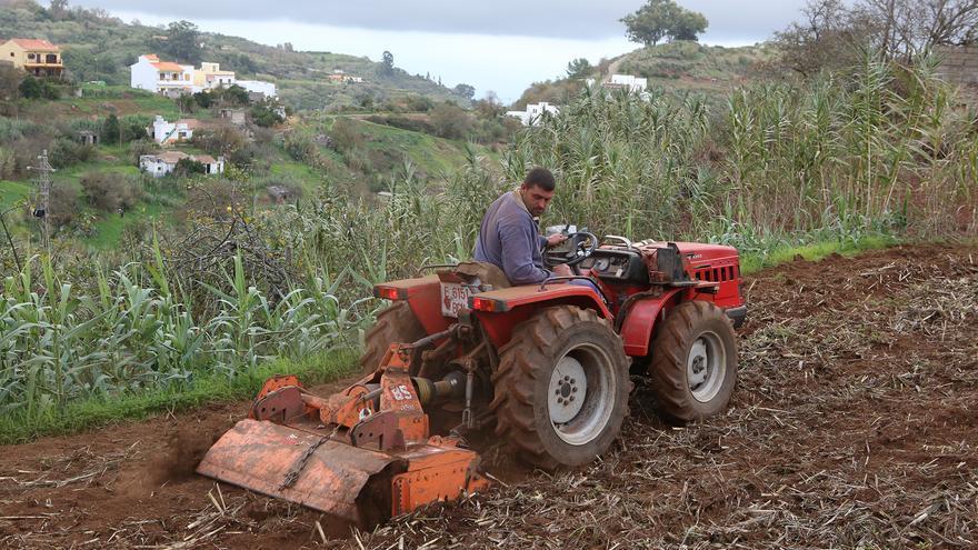 Un agricultor trabaja la tierra en un cultivo de papas en Valleseco (Gran Canaria).