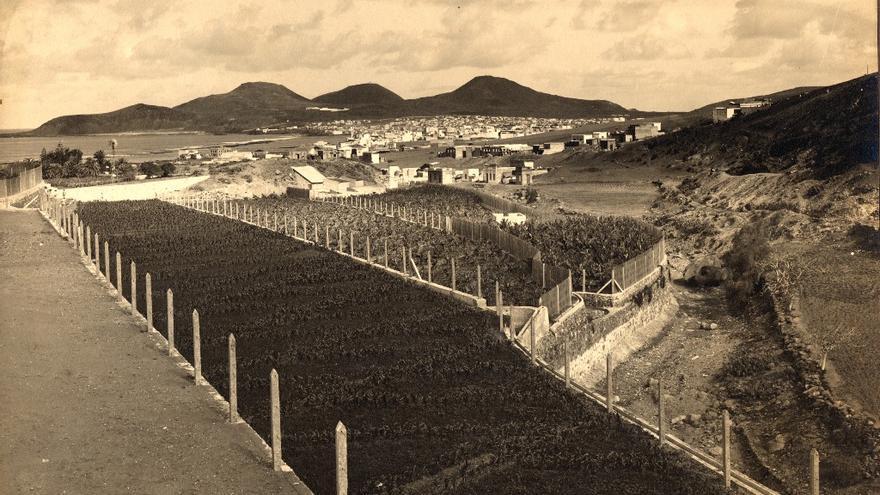 Finca de Mr. Leacock en el barranco de La Ballena (Teodoro Maisch. Cerca de 1927)