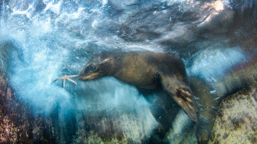 C:\fakepath\© Luis Javier Sandoval_Wildlife Photographer of the Year- Impressions winner.jpg