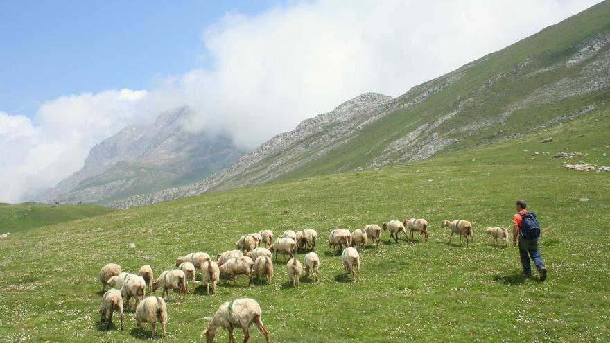 Medio Rural convoca ayudas para las asociaciones de criadores de abejas, conejos y ovejas