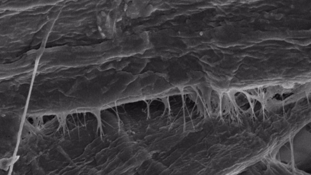 Nanocelulosa mejorando la interacción fibra-fibra durante el proceso de reciclaje del cartón.