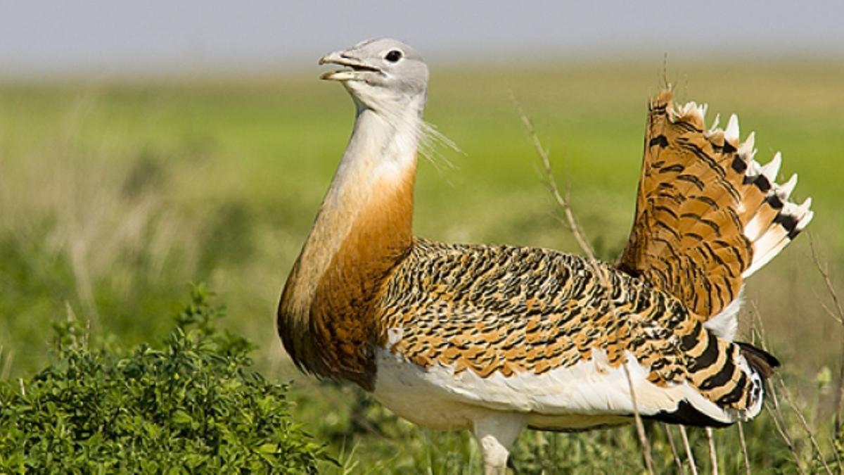 El proyecto valorará actuaciones para reducir las causas que están incidiendo sobre estas poblaciones de aves.