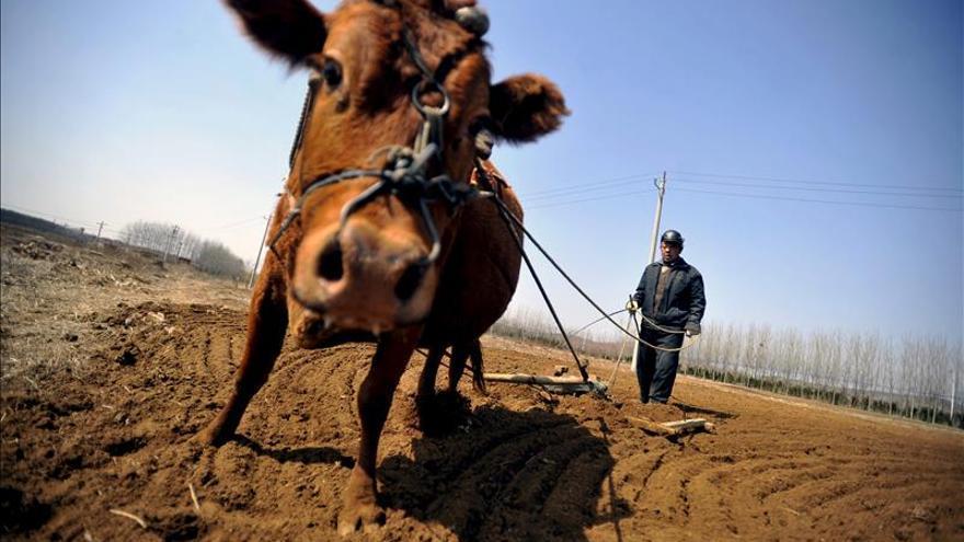 La FAO difunde pautas para que los países elaboren nuevos censos agrícolas