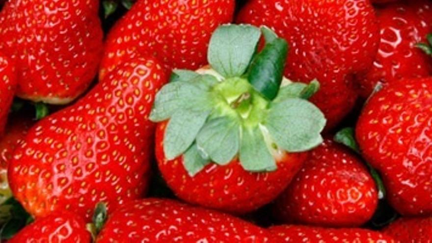 UPA advierte de que la campaña de la fresa podría ser la peor de la historia en cuanto a precios