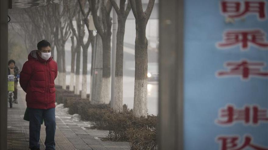 China plantó 2.600 millones de árboles en 2012 para intentar frenar la polución
