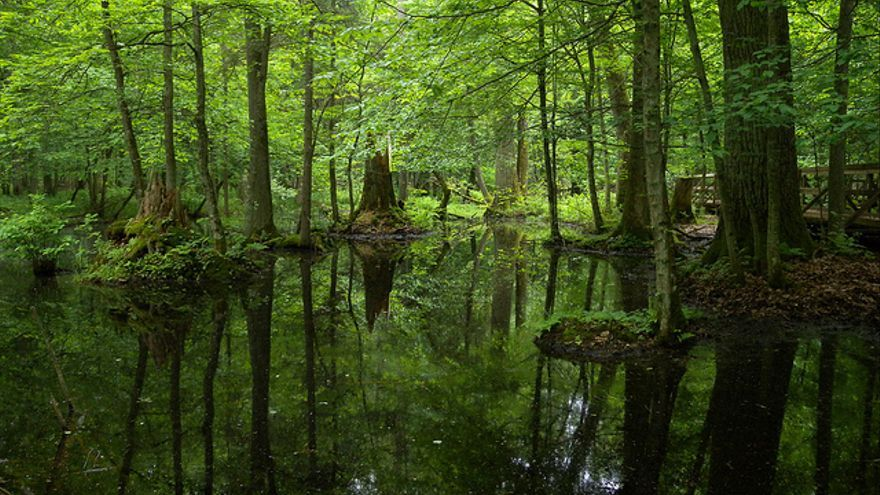 Parque Nacional Białowieża en Polonia, por Frank Vassen