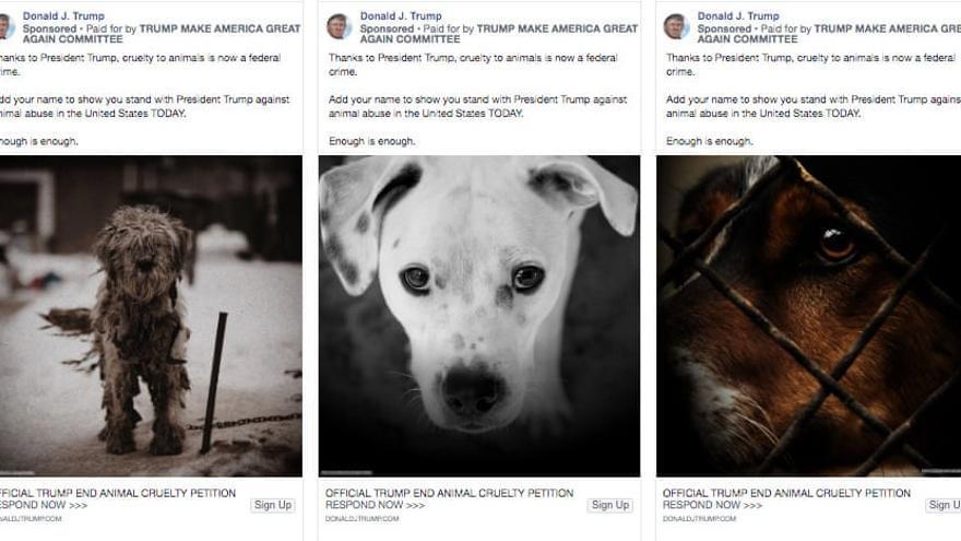 Anuncio de Trump contra el maltrato de animales.