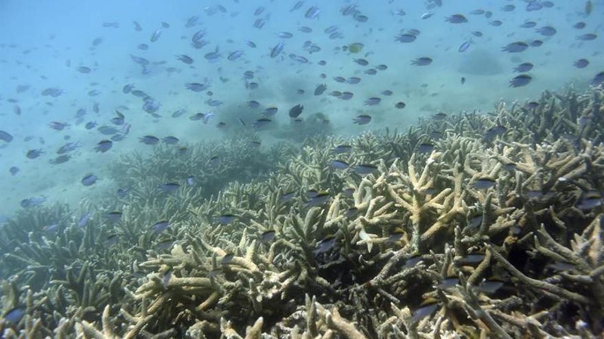 Australia puede perder 750 millones de dólares por blanqueo de corales