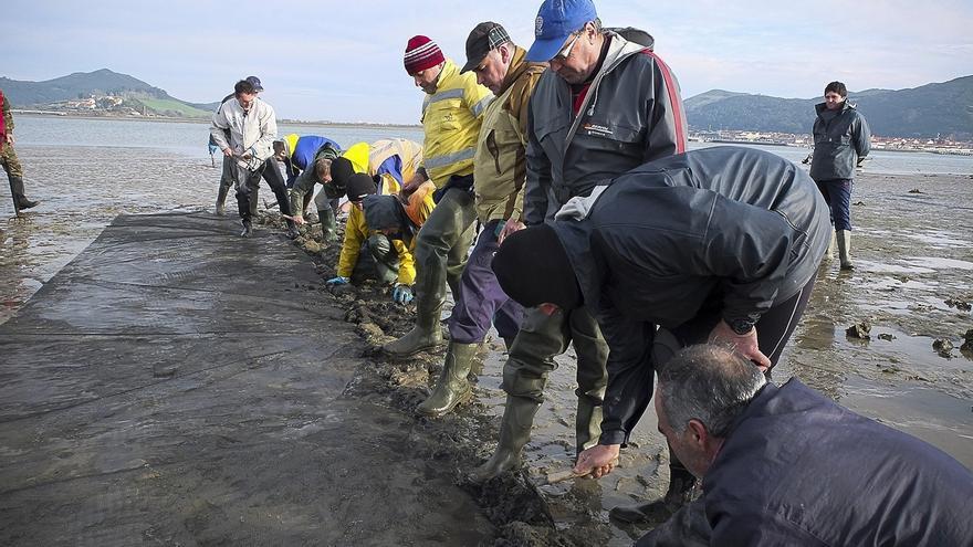 Aprobado el plan de explotación de almeja de Santoña, abierto a 40 mariscadores para extraer 7.000 kilos