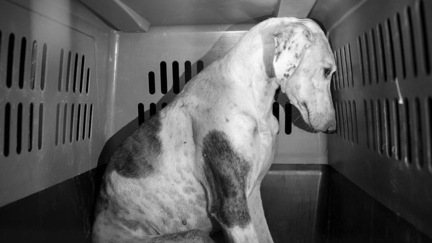 La Juani, una cachorra abandonada, poco después de ser rescatada.