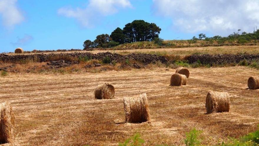 La climatología no está ayudando al campo herreño, la falta de lluvias auguran meses complicados y difíciles para el sector.