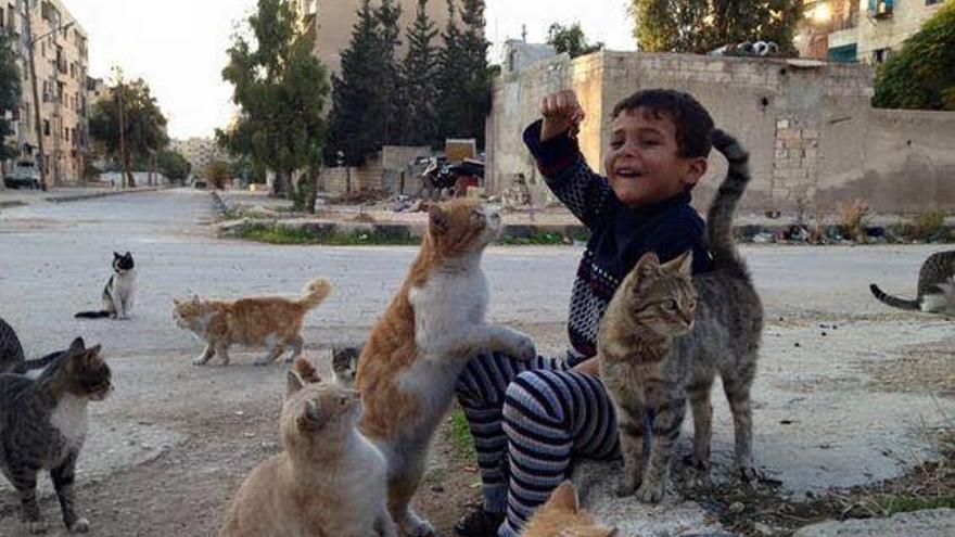 Un niño de Alepo con gatos rescatados por Alaa.