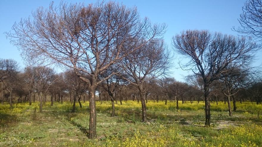 Doñana, un año después del incendio. Foto: WWF