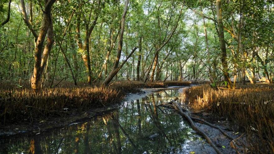 Las pérdidas de biodiversidad están en niveles sin precedentes, según la ONU