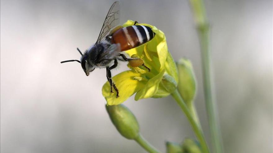 Otros insectos, además de las abejas, claves en la polinización de cultivos