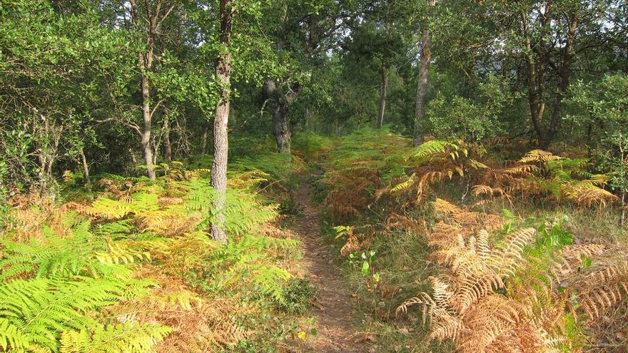 Álava destina 947.040 euros a la mejora de bosques públicos y construcción de infraestructuras forestales