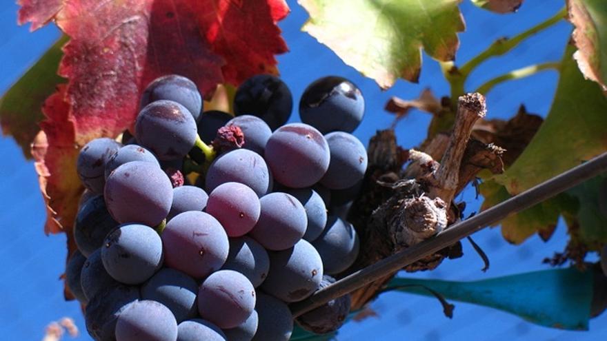 Garnacha: te proponemos 20 vinos de siete denominaciones de origen históricas