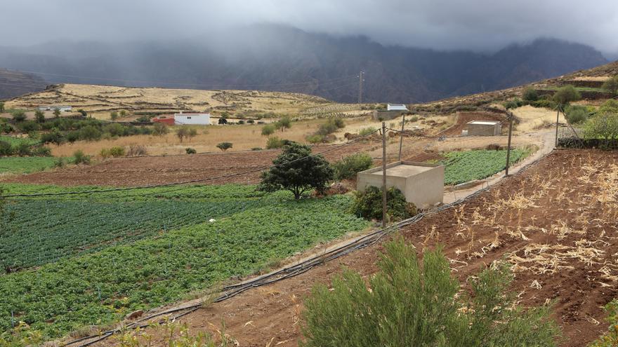Cultivos en Artenara (Gran Canaria).