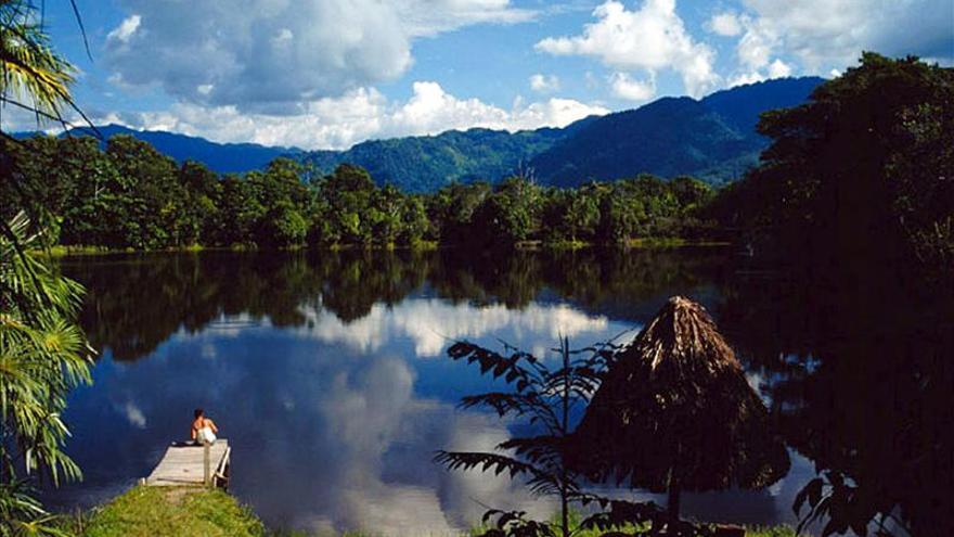 Los científicos explican la mayor diversidad de los bosques tropicales