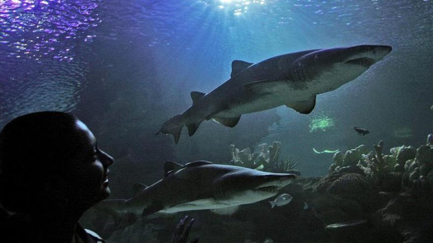 Cuba y EEUU muestran resultados de monitoreo conjunto a tiburones en la isla
