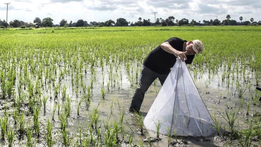 Bart Knols, el entomólogo que sedujo con queso al mosquito de la malaria